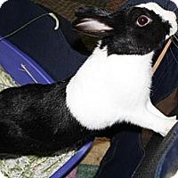 Adopt A Pet :: Luna - Williston, FL