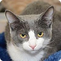 Adopt A Pet :: Nibbles - Harrisburg, NC