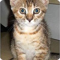 Adopt A Pet :: Belita - Colmar, PA