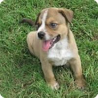 Adopt A Pet :: Clyde - Justin, TX