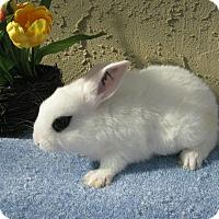 Adopt A Pet :: Baldwin - Bonita, CA