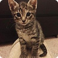 Adopt A Pet :: Lori - Gainesville, FL
