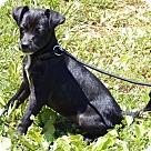 Adopt A Pet :: Gage(7 lb) New Pics & Video
