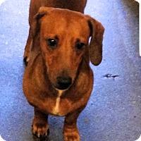 Adopt A Pet :: Brett - Decatur, GA