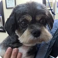 Adopt A Pet :: Diva - Orlando, FL