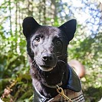 Adopt A Pet :: Nancy - Seattle, WA
