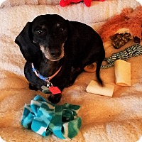 Adopt A Pet :: Mindy - Decatur, GA