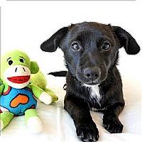Adopt A Pet :: Manolito - Mipiltas, CA