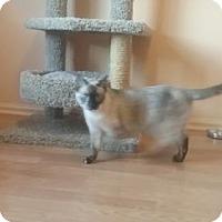 Adopt A Pet :: Mordu - Greeley, CO