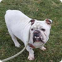 Adopt A Pet :: Bubba - Park Ridge, IL