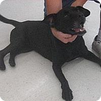 Adopt A Pet :: Ava - Chatham, VA