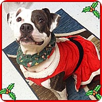 Adopt A Pet :: Colleen - Baton Rouge, LA