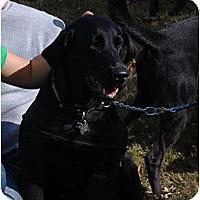 Adopt A Pet :: Jenny - Cumming, GA