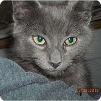Adopt A Pet :: Nathaniel - Riverside, RI