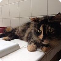 Adopt A Pet :: Lexi Cross Post for KH - Herndon, VA