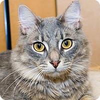 Adopt A Pet :: Smokey - Irvine, CA