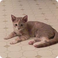 Adopt A Pet :: Misty - Fayetteville, TN