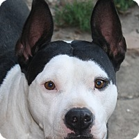 Adopt A Pet :: Cookie - Sacramento, CA