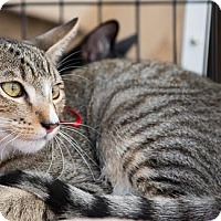 Adopt A Pet :: Paulo - Woodland, CA