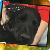 Adopt A Pet :: BEAR - Red Bluff, CA