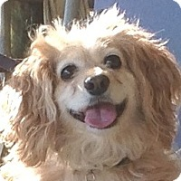 Adopt A Pet :: Cali - Santa Barbara, CA