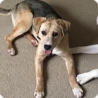 Adopt A Pet :: Mariah - Columbus, OH