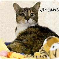 Adopt A Pet :: Virginia - Sherwood, OR