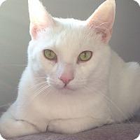 Adopt A Pet :: Ghost - Palatine, IL