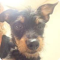 Adopt A Pet :: Melissa - Fort Collins, CO