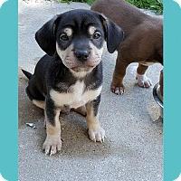 Adopt A Pet :: Buster - Genoa City, WI