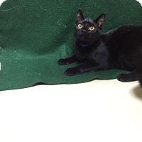 Adopt A Pet :: Jeremiah - Decatur, AL
