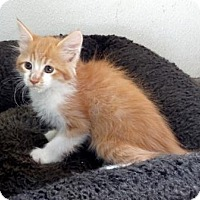 Adopt A Pet :: Cheddar - Lathrop, CA