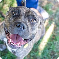 Adopt A Pet :: Gillian- Ohio - Fulton, MO