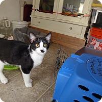 Adopt A Pet :: Stenson - Mission Viejo, CA