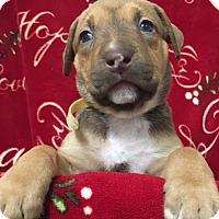 Adopt A Pet :: Jaina - San Diego, CA