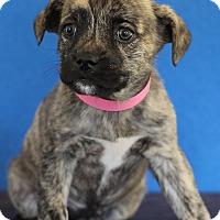 Adopt A Pet :: April - Waldorf, MD