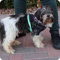 Adopt A Pet :: MAX - Las Vegas, NV