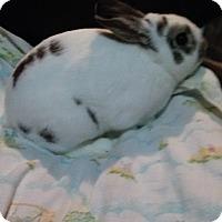 Adopt A Pet :: Chomper - Hammond, IN