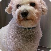 Adopt A Pet :: Mimi - Bloomington, IL