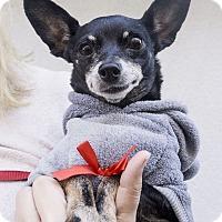 Adopt A Pet :: Pickle - Los Angeles, CA