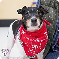 Adopt A Pet :: Ralph - Grand Rapids, MI