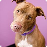 Adopt A Pet :: Blaze - Von Ormy, TX