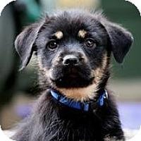 Adopt A Pet :: Chrome - Austin, TX