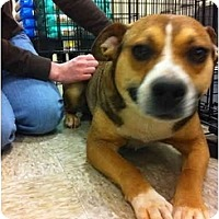 Adopt A Pet :: Cindy - Blanchard, OK