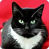 Adopt A Pet :: Fox - Athens, GA