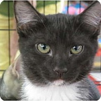 Adopt A Pet :: JellyBean - Port Republic, MD