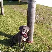 Adopt A Pet :: Diana - Eustis, FL