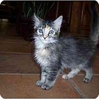 Adopt A Pet :: Miley - Irvine, CA