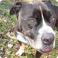 Adopt A Pet :: Da' Kidd - Rocky Point, NC