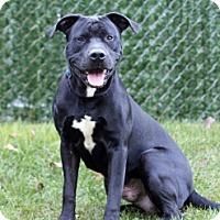 Adopt A Pet :: Lincoln - Port Washington, NY